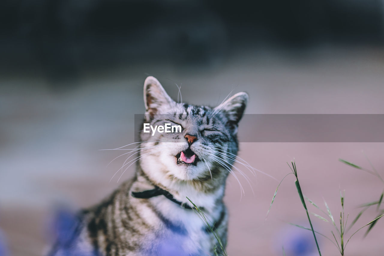 Close-up of cat with eyes closed in field
