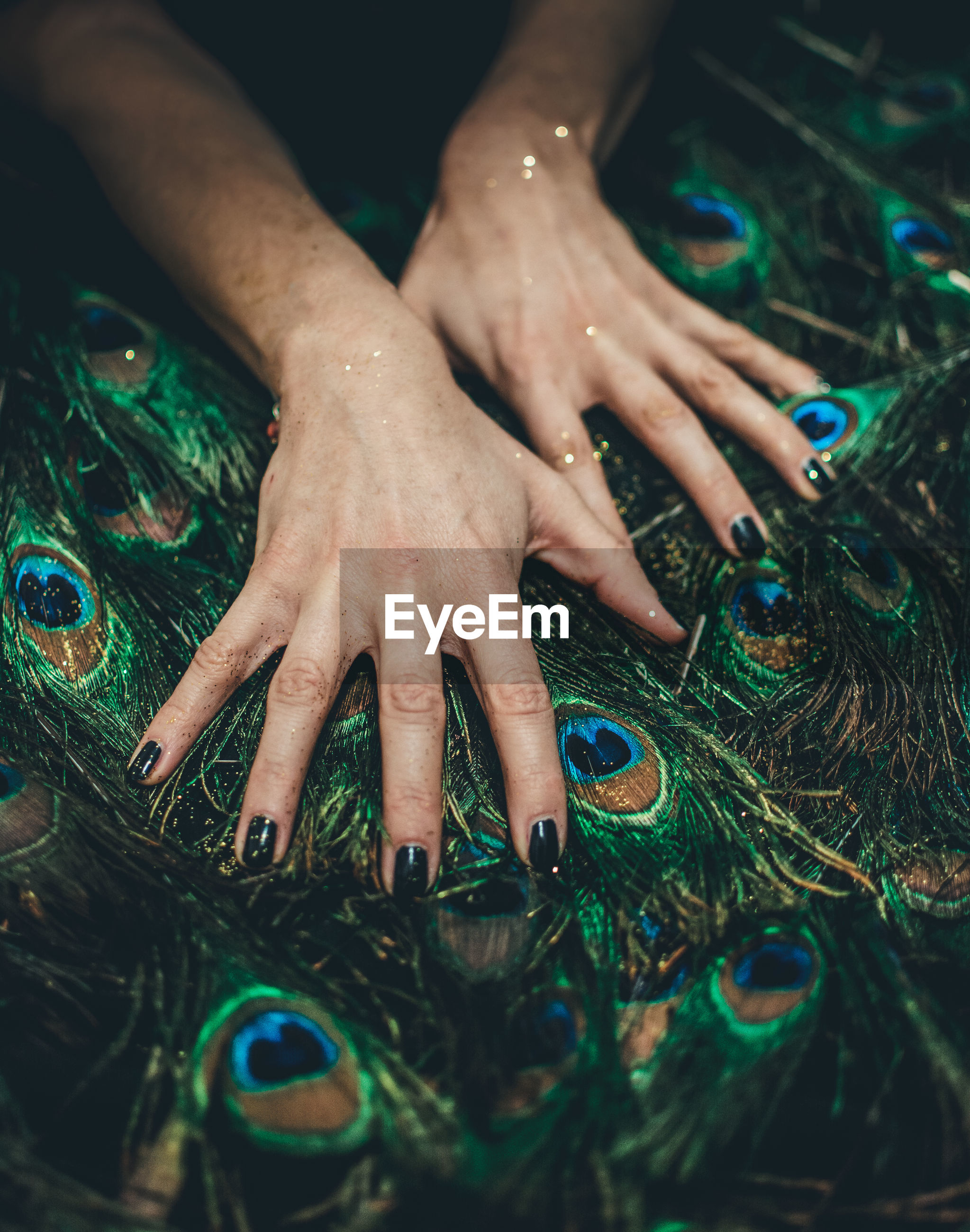 Cropped hands of woman on peacock feathers