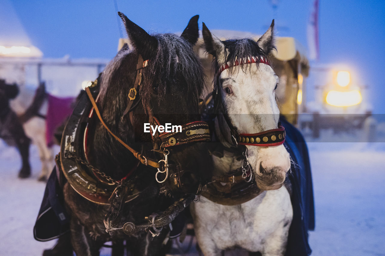 Horses standing in snow