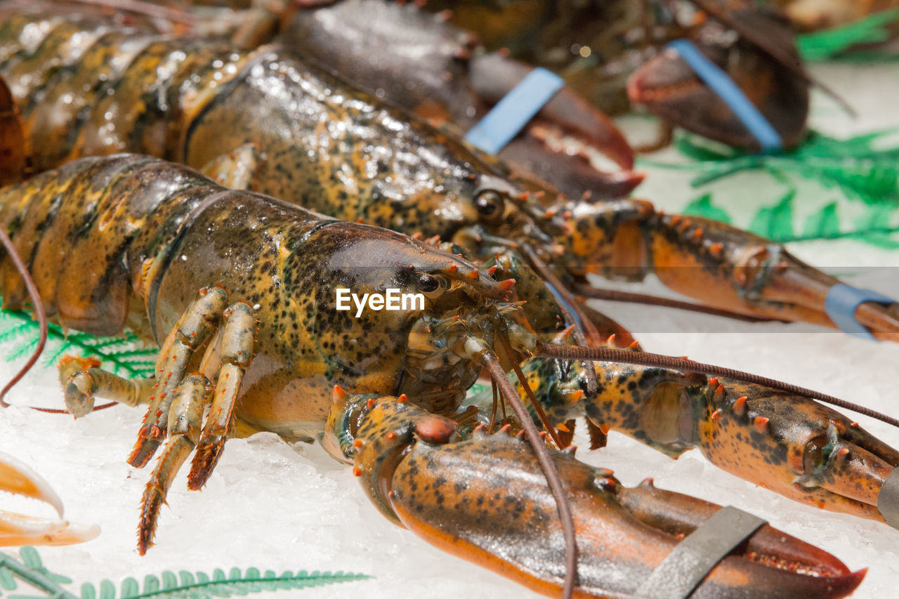 food, seafood, animal, food and drink, freshness, wellbeing, fish, close-up, crustacean, no people, healthy eating, vertebrate, focus on foreground, for sale, indoors, raw food, market, retail, animal themes, day