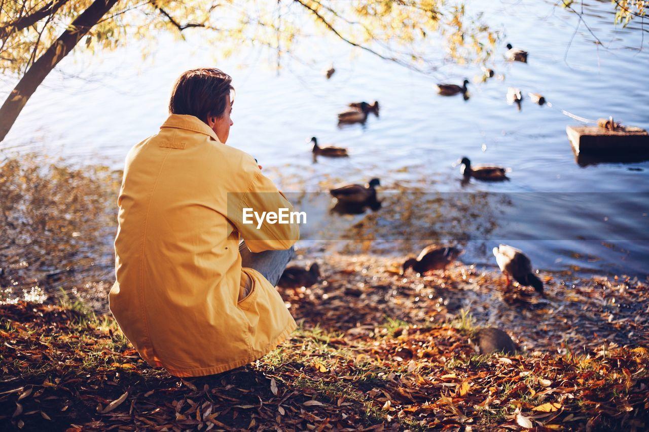 Rear View Of Man Looking At Ducks Swimming On Lake