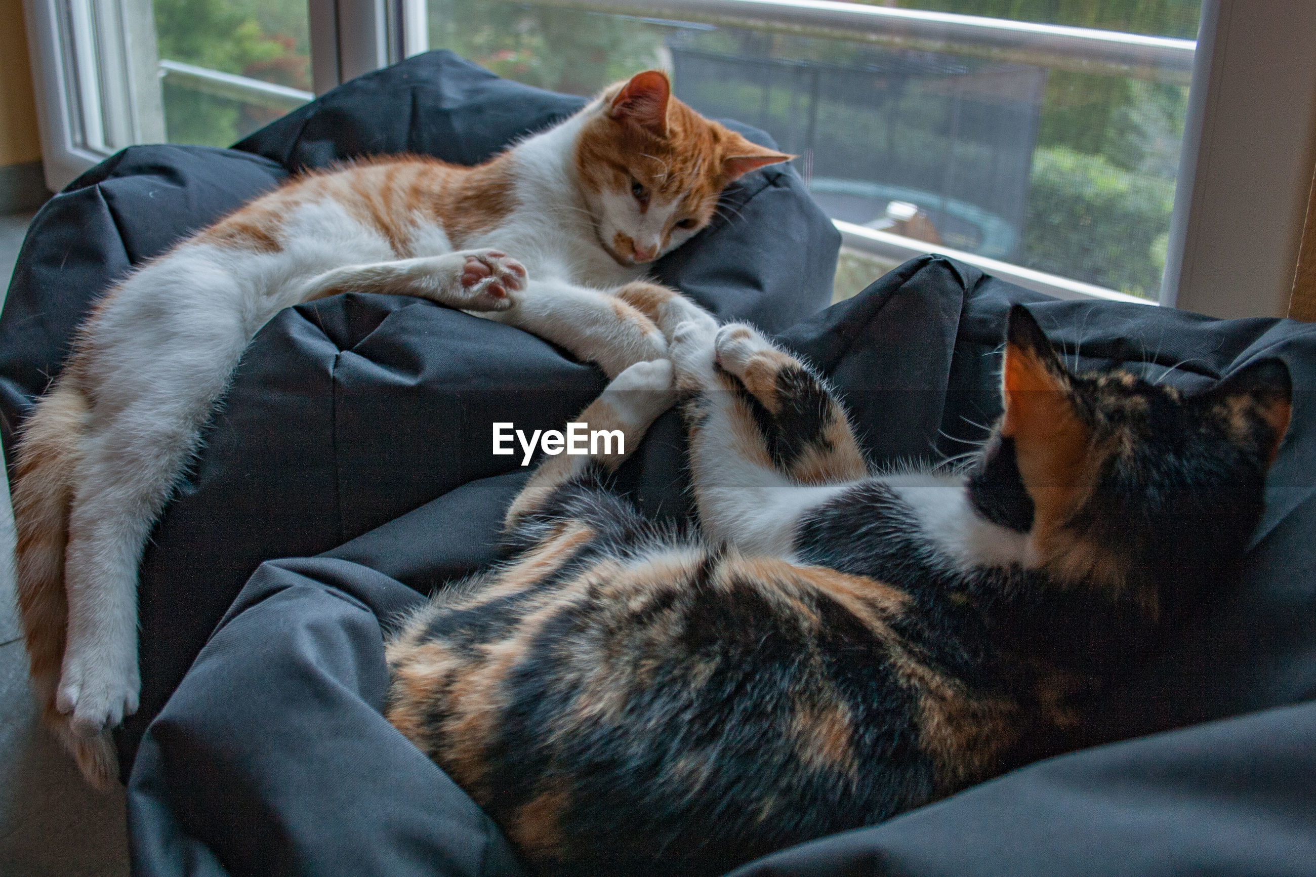 CATS RESTING IN THE HOME