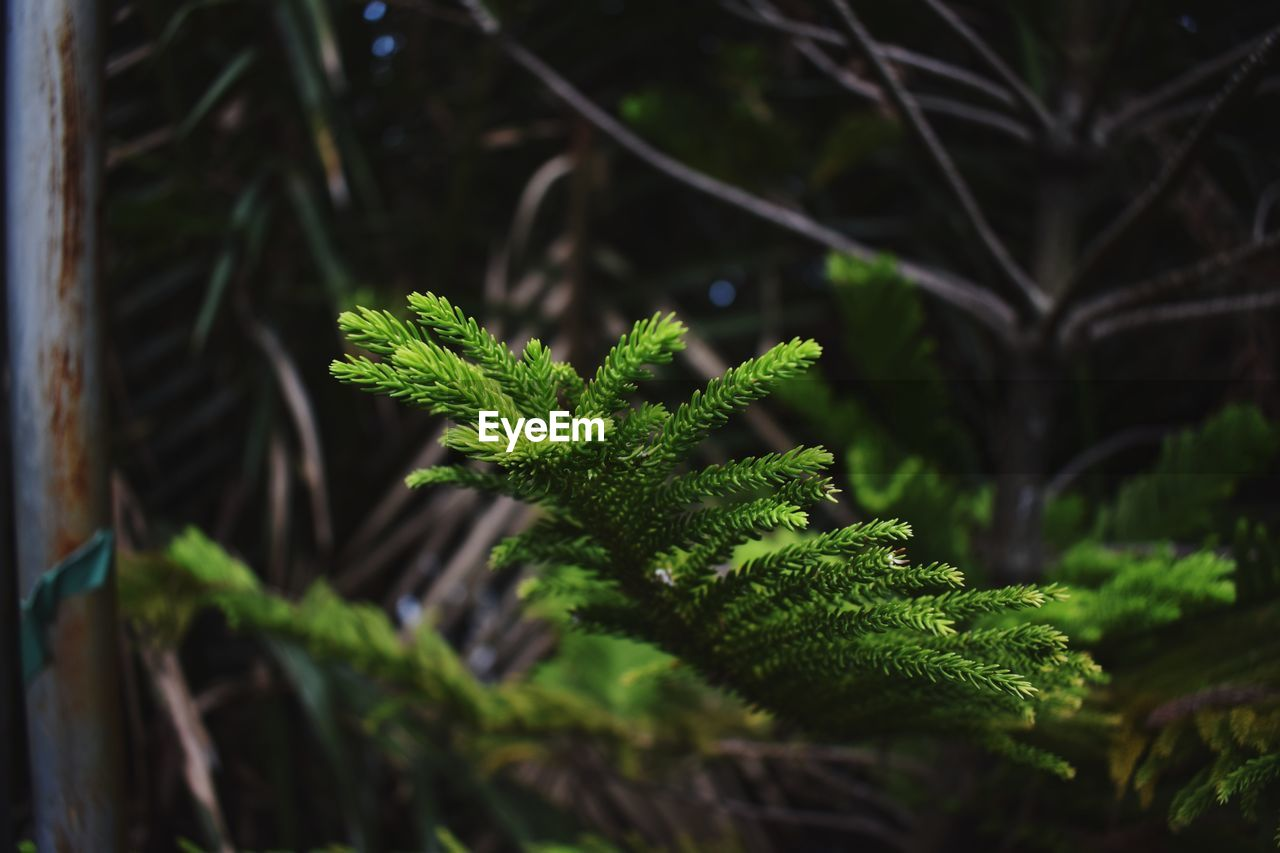 Close-up of plant ferns