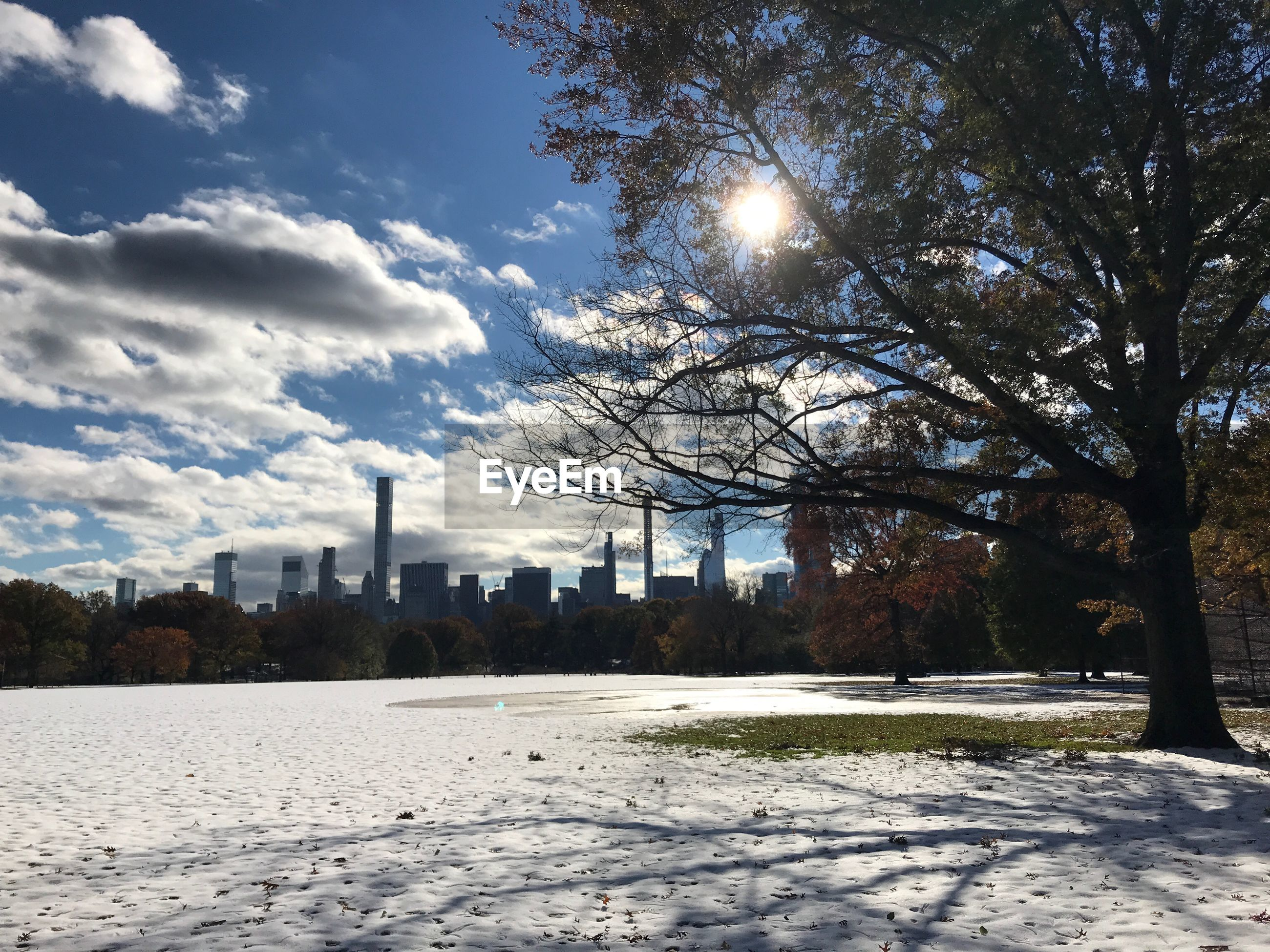Trees and buildings in city during winter