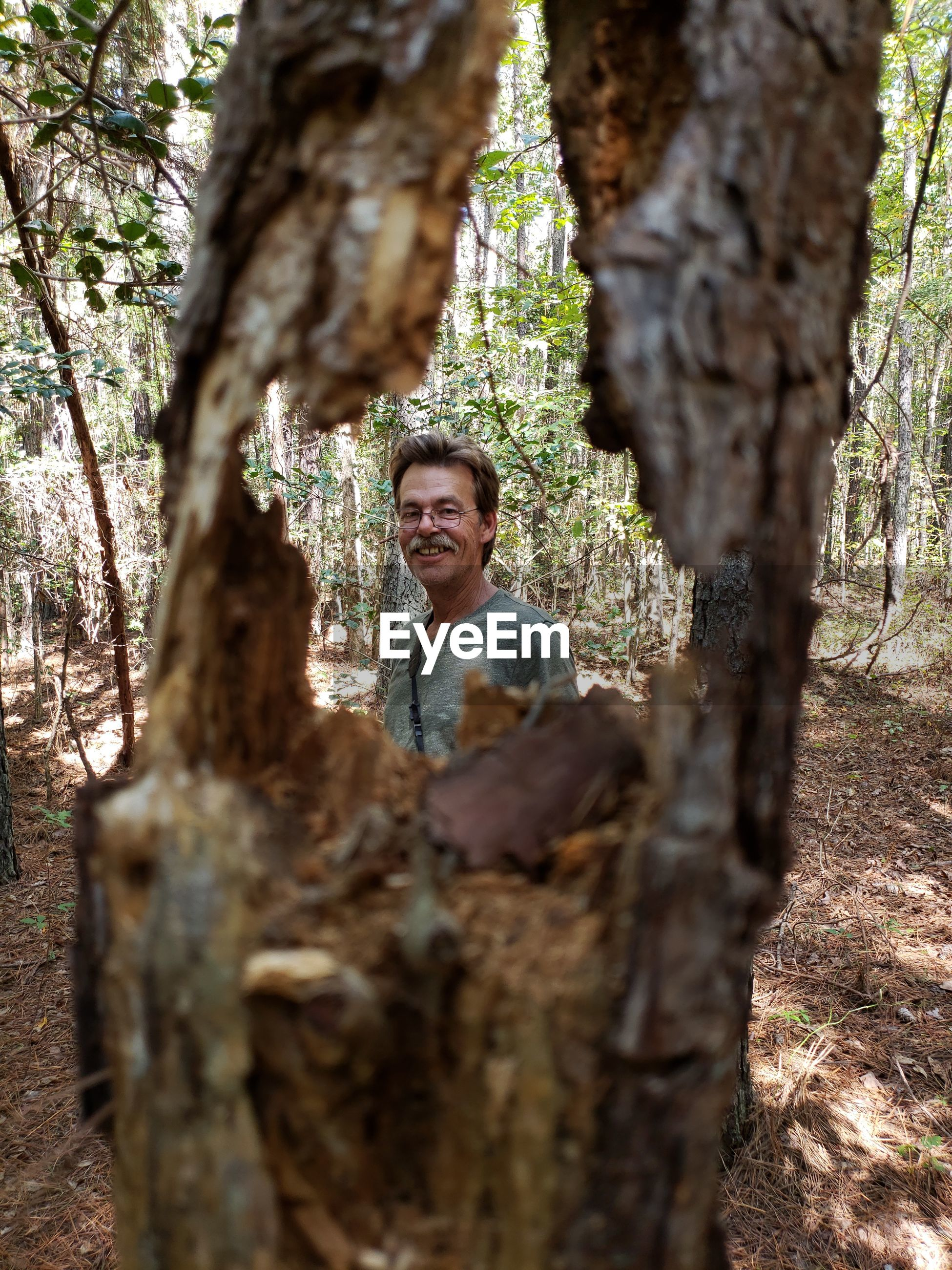 Portrait of smiling man seen through damaged tree trunk in forest