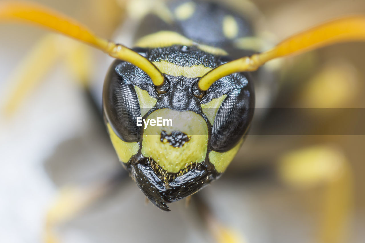 close-up, animal themes, yellow, animal, one animal, animal wildlife, animals in the wild, focus on foreground, day, no people, invertebrate, insect, nature, animal body part, black color, selective focus, outdoors, beauty in nature, flower, animal head, animal eye