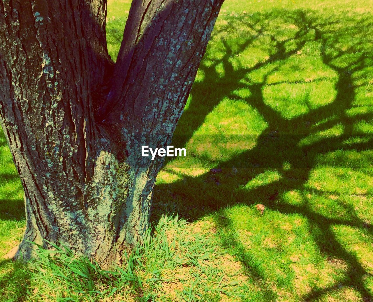 tree trunk, tree, day, environmental issues, nature, no people, outdoors, deforestation, growth, forest, grass, close-up