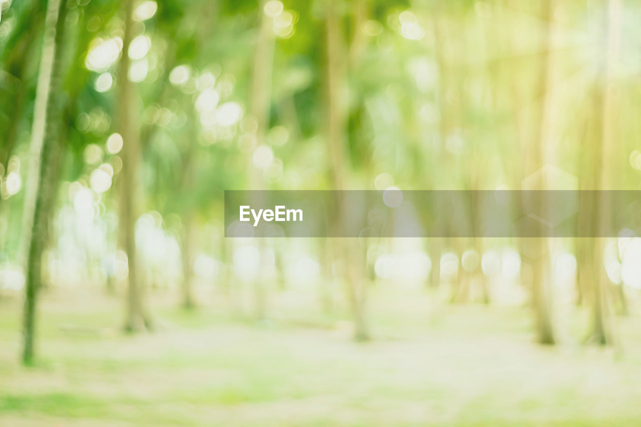 land, tree, forest, plant, no people, day, nature, green color, tranquility, outdoors, beauty in nature, focus on foreground, defocused, growth, selective focus, field, tranquil scene, scenics - nature, non-urban scene, tree trunk, bamboo - plant