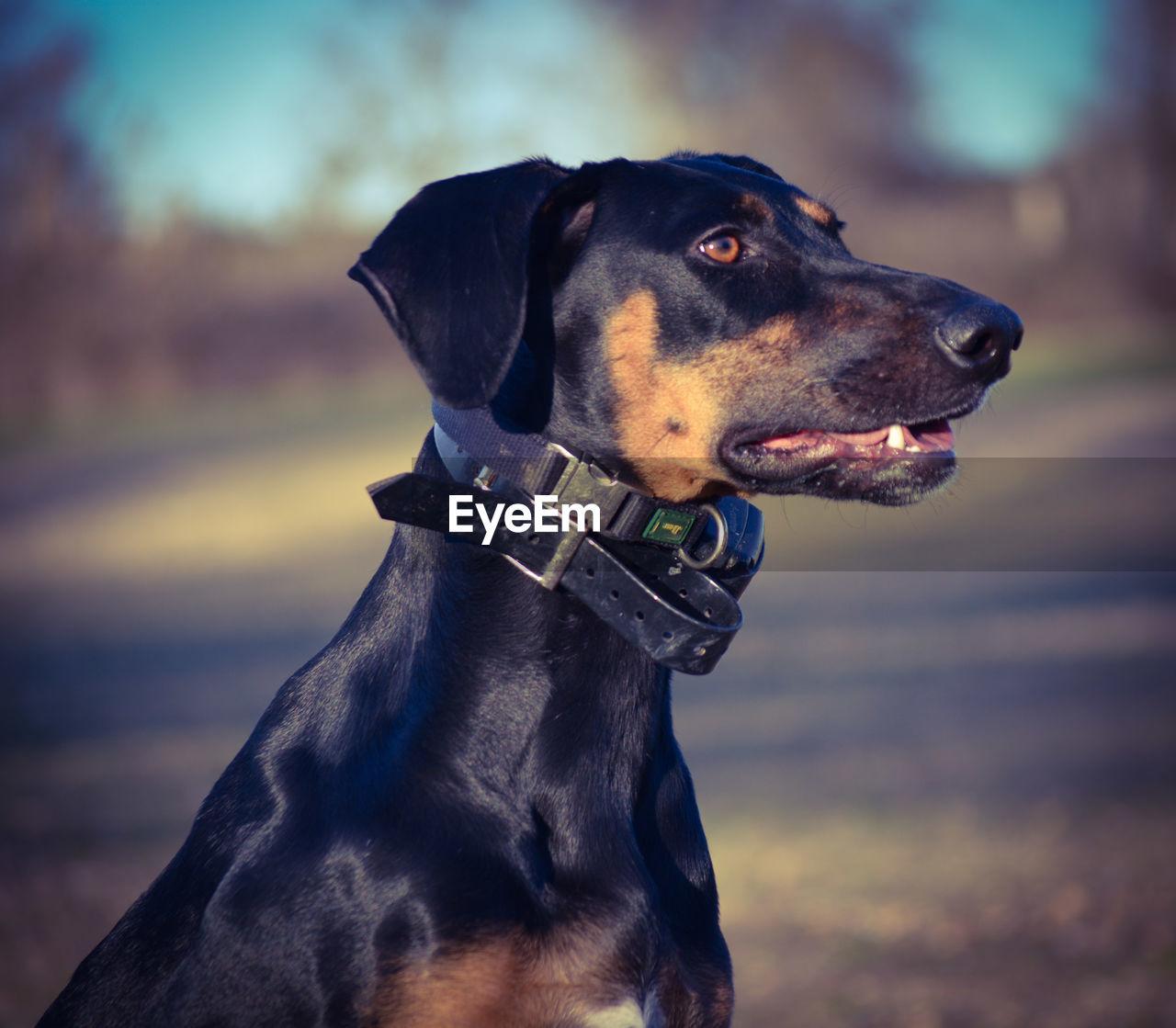 CLOSE-UP OF DOG ON CAMERA