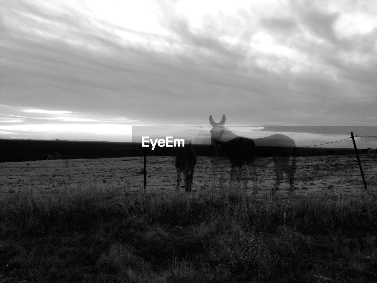 Double exposure of horses on field against sky