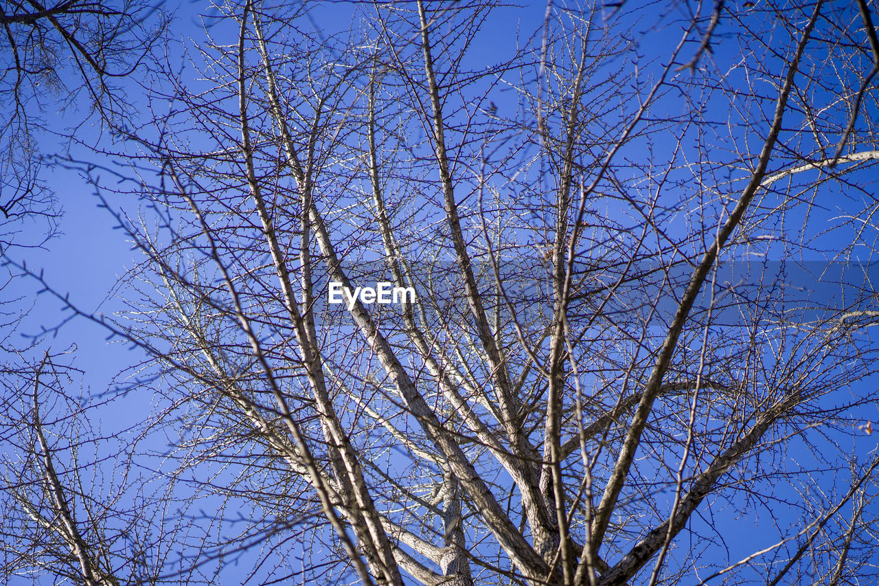 tree, sky, low angle view, branch, plant, bare tree, no people, clear sky, beauty in nature, blue, day, nature, tranquility, outdoors, growth, scenics - nature, sunlight, tranquil scene, backgrounds, flower, tree canopy