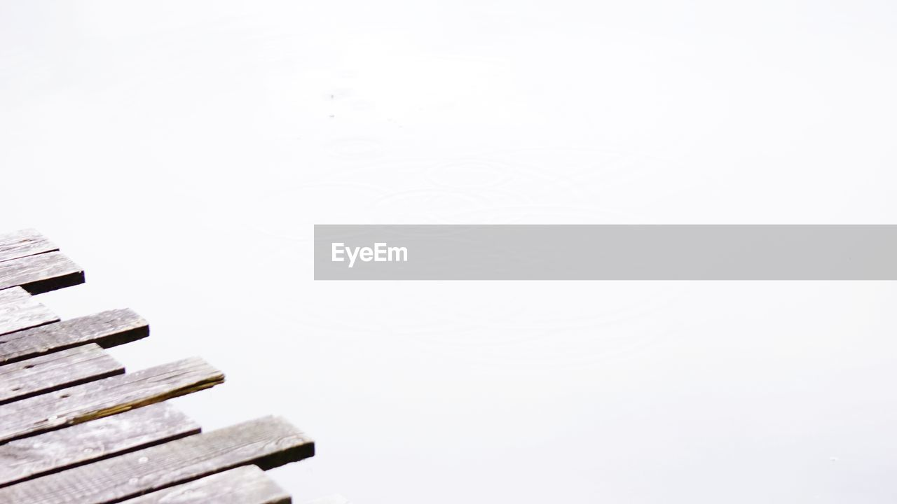 copy space, no people, clear sky, day, outdoors, nature, white background, close-up