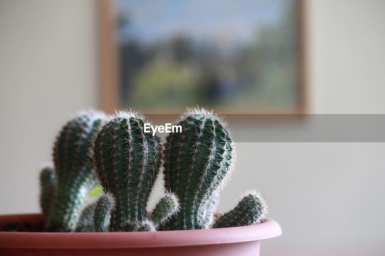 Close-Up Of Potted Cactus Plant At Home