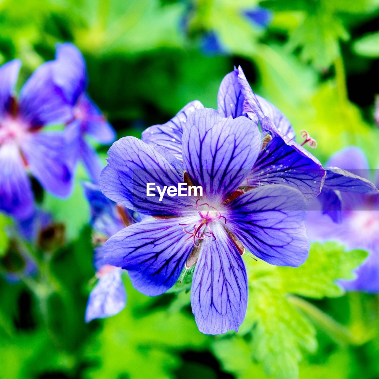 flower, petal, beauty in nature, fragility, purple, growth, nature, freshness, flower head, plant, no people, outdoors, blooming, close-up, day, springtime, blue, iris - plant