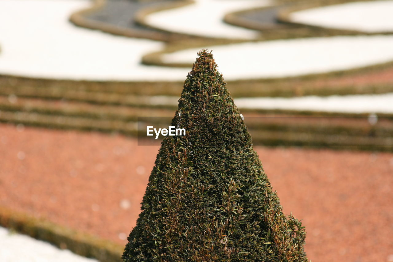 plant, close-up, no people, green color, focus on foreground, nature, growth, day, tree, outdoors, sunlight, decoration, beauty in nature, christmas, christmas tree, field, moss, shape, land, selective focus, hedge