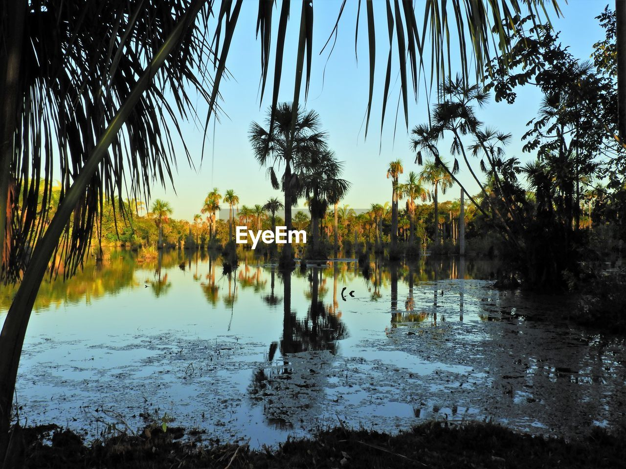 tree, water, plant, tropical climate, tranquility, beauty in nature, palm tree, sky, nature, no people, tranquil scene, growth, reflection, scenics - nature, lake, day, outdoors, idyllic, non-urban scene