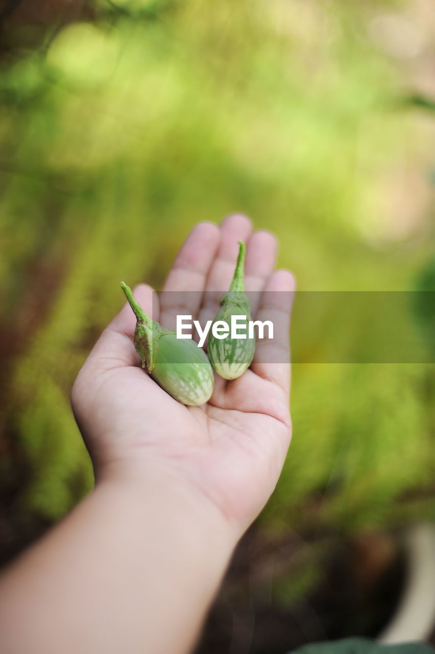human hand, hand, holding, green color, human body part, one person, focus on foreground, real people, close-up, food and drink, day, food, unrecognizable person, freshness, personal perspective, nature, body part, finger, healthy eating, outdoors