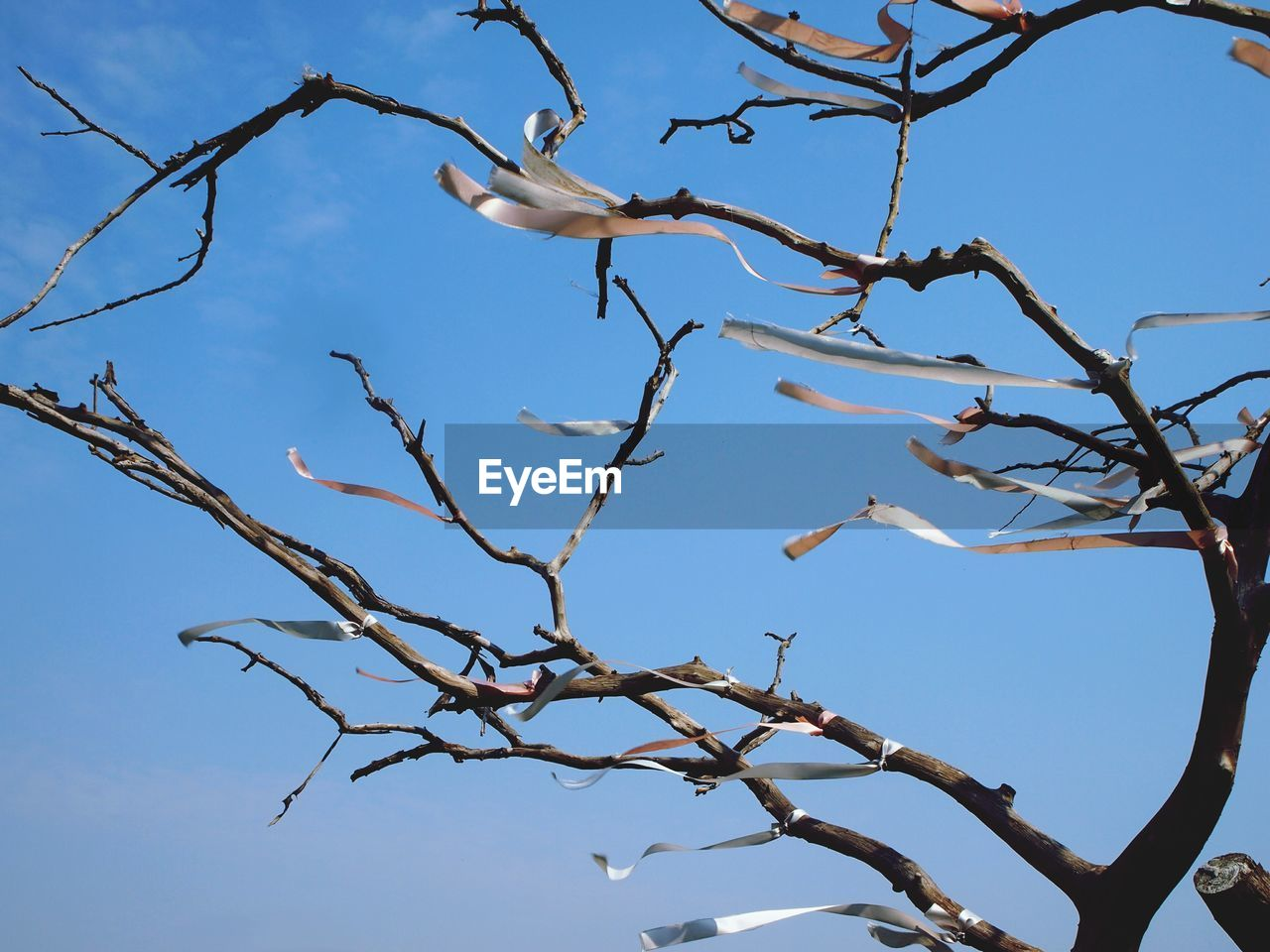 tree, branch, plant, bird, sky, low angle view, no people, animal wildlife, nature, animal themes, vertebrate, animals in the wild, animal, bare tree, day, clear sky, outdoors, perching, beauty in nature, tranquility, dead plant