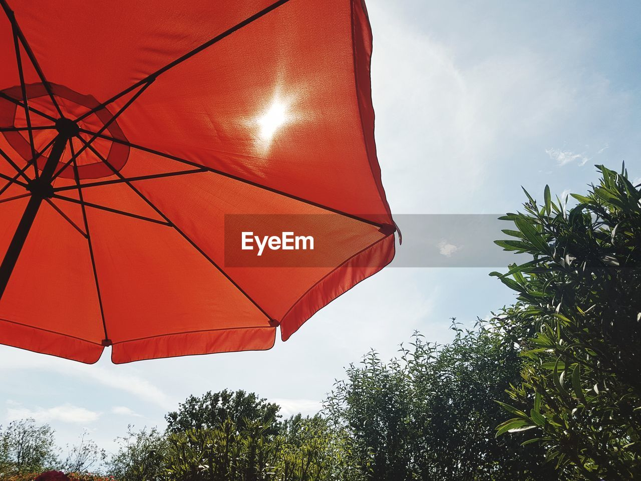 tree, sky, plant, umbrella, protection, nature, cloud - sky, red, security, parasol, low angle view, day, orange color, no people, outdoors, growth, sunlight, safety, beauty in nature