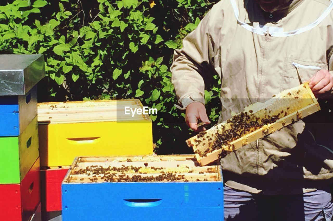 beehive, apiculture, bee, honey, honeycomb, insect, colony, outdoors, one person, day, people