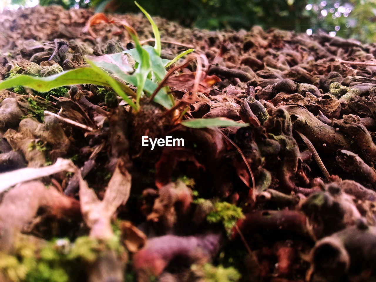 growth, nature, plant, leaf, outdoors, day, close-up, no people, foliage, fragility, beauty in nature
