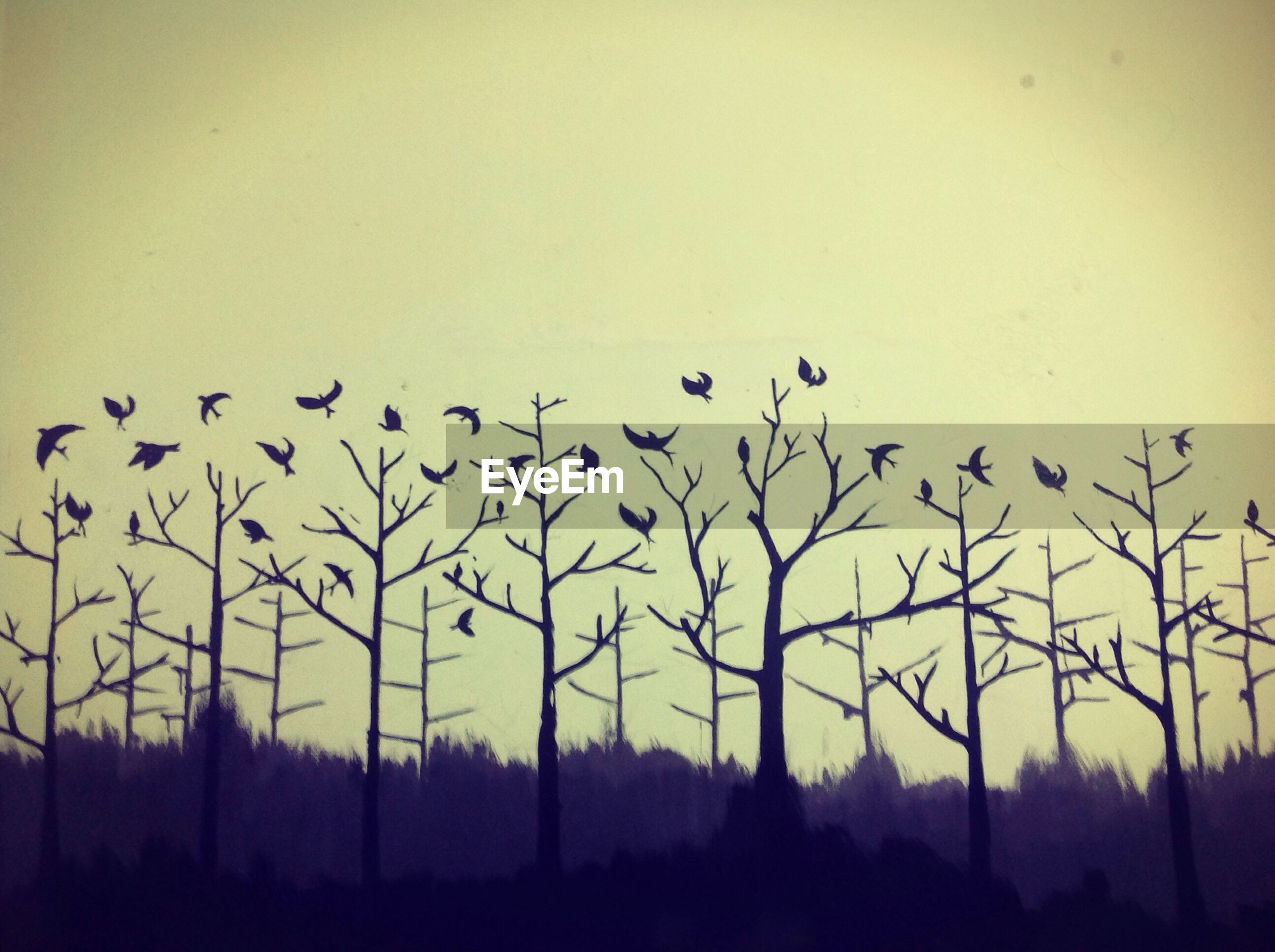 silhouette, clear sky, sunset, tree, bare tree, nature, tranquility, copy space, bird, field, tranquil scene, beauty in nature, sky, landscape, scenics, dusk, animal themes, no people, branch, outdoors