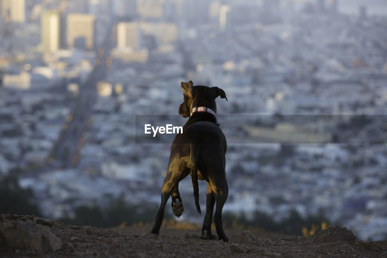 Rear View Of Dog On Mountain Against Cityscape