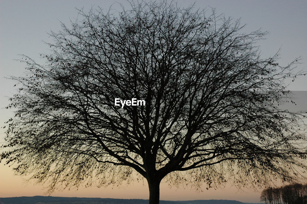 tree, sky, plant, bare tree, silhouette, branch, beauty in nature, nature, tranquility, no people, trunk, tree trunk, scenics - nature, single tree, clear sky, low angle view, tranquil scene, growth, outdoors, dusk