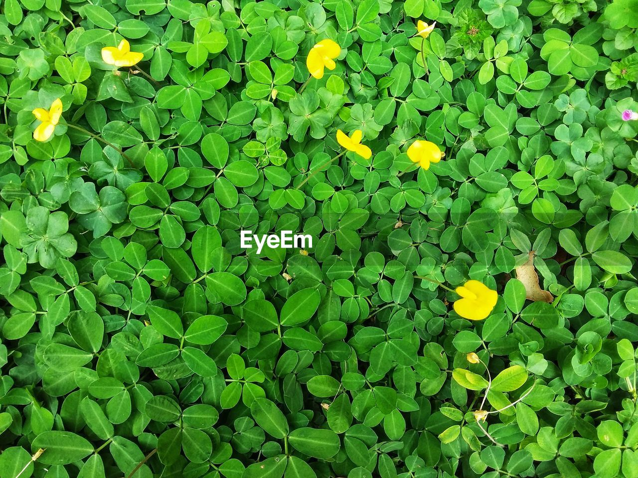 freshness, green color, plant, yellow, flower, flowering plant, growth, beauty in nature, plant part, leaf, fragility, vulnerability, nature, no people, petal, high angle view, day, close-up, full frame, inflorescence, flower head, outdoors