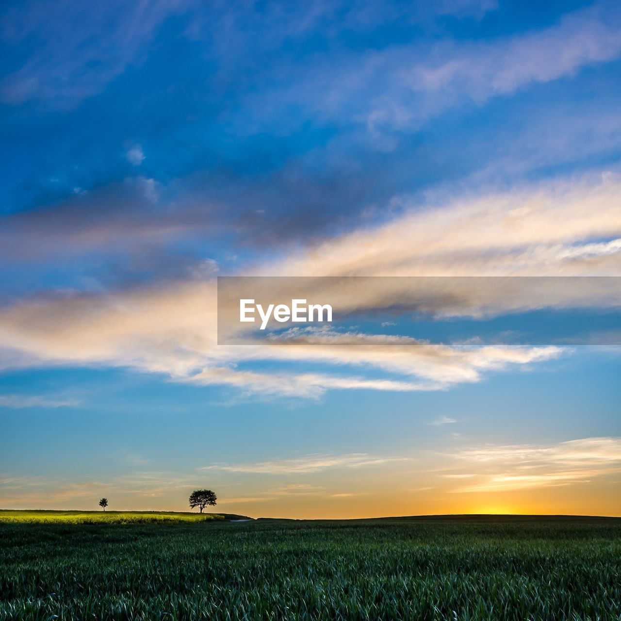 sky, cloud - sky, field, land, beauty in nature, landscape, environment, scenics - nature, tranquil scene, tranquility, plant, nature, agriculture, rural scene, farm, growth, sunset, crop, no people, idyllic, outdoors