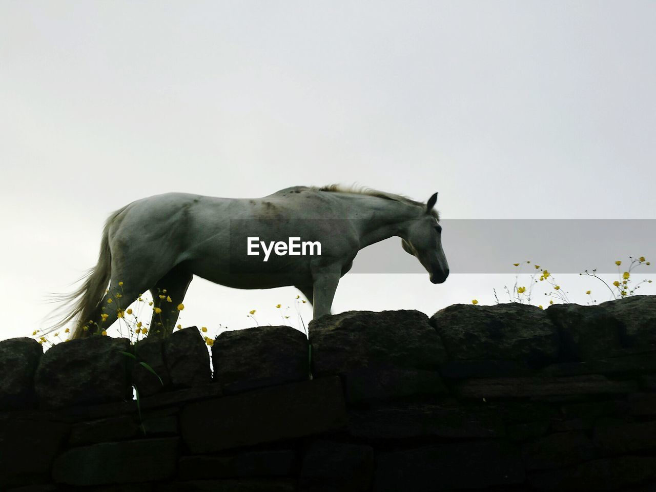 Low angle view of horse standing on rocks against clear sky