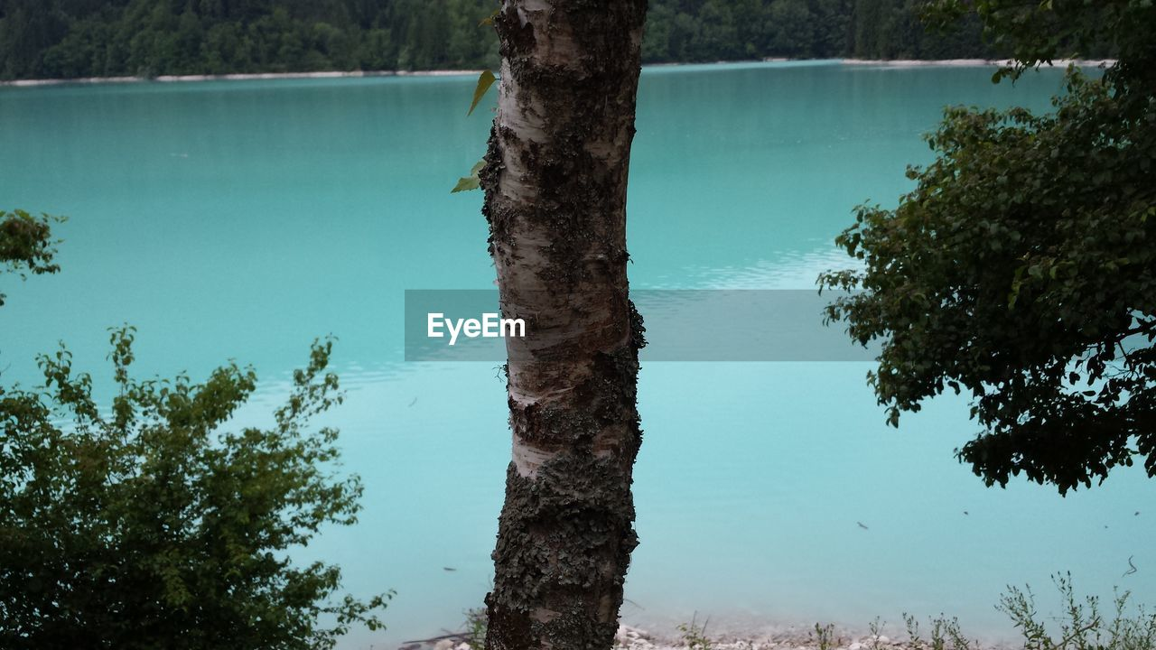 tree, tree trunk, nature, water, day, lake, tranquility, no people, beauty in nature, tranquil scene, growth, outdoors, scenics, sky