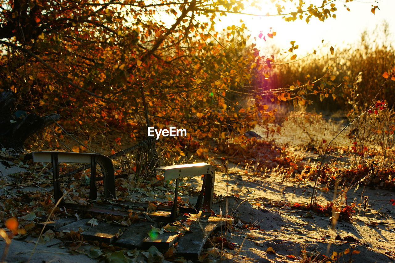 BENCH BY AUTUMN TREES