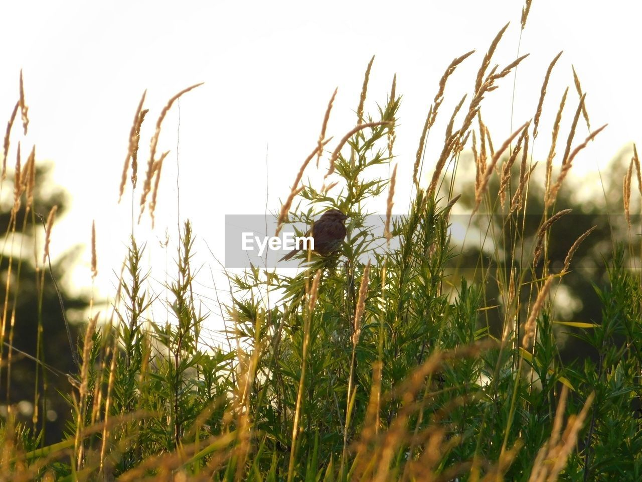 nature, grass, growth, one animal, field, selective focus, plant, outdoors, no people, day, animal themes, beauty in nature, clear sky, close-up, bird, sky