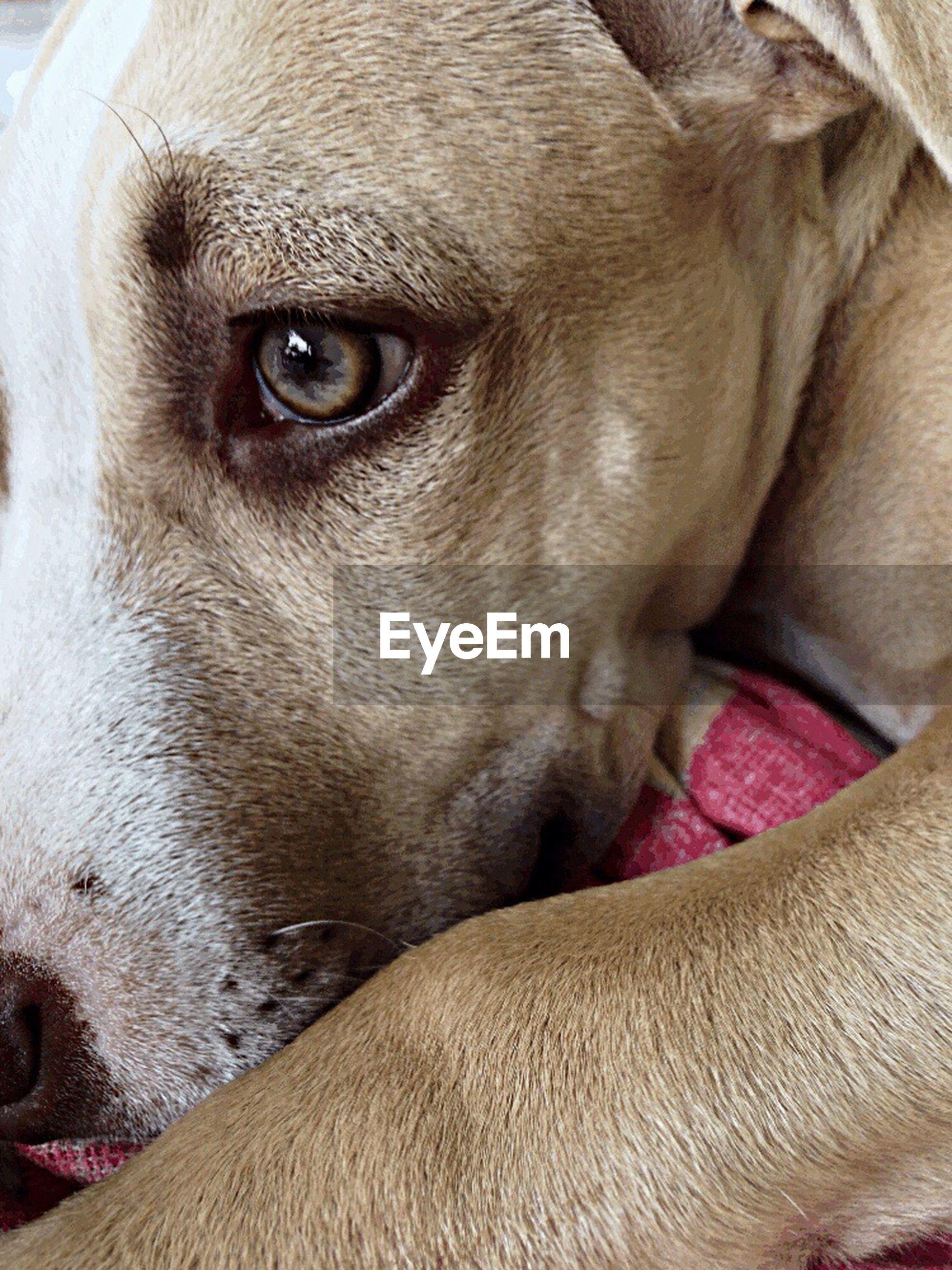 one animal, animal head, mammal, close-up, animal themes, dog, animal body part, domestic animals, pets, animal eye, no people, outdoors, day