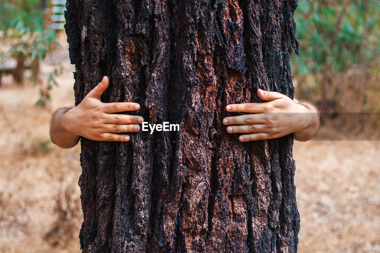 Cropped hands of man embracing tree