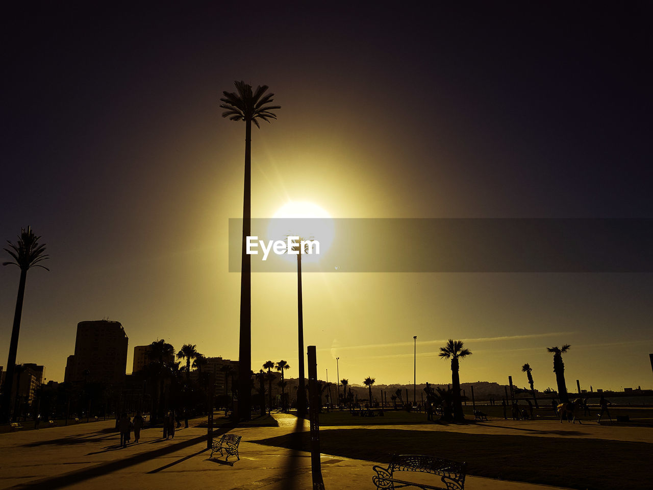 SILHOUETTE OF STREET LIGHT AND PALM TREE AGAINST SKY