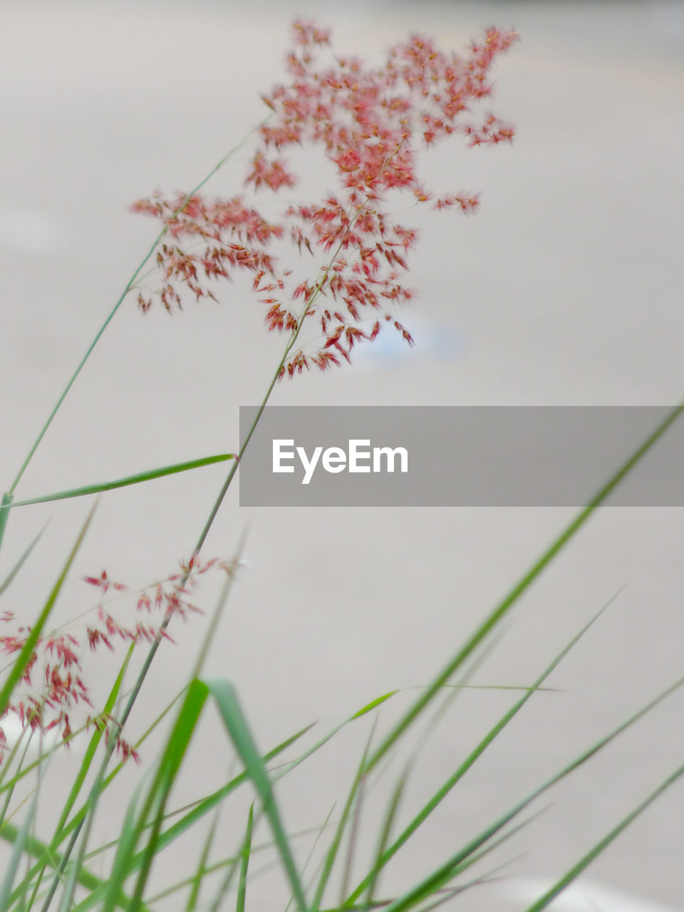 plant, growth, nature, beauty in nature, flowering plant, selective focus, no people, day, close-up, vulnerability, flower, fragility, focus on foreground, tranquility, outdoors, freshness, sky, grass, field, plant stem