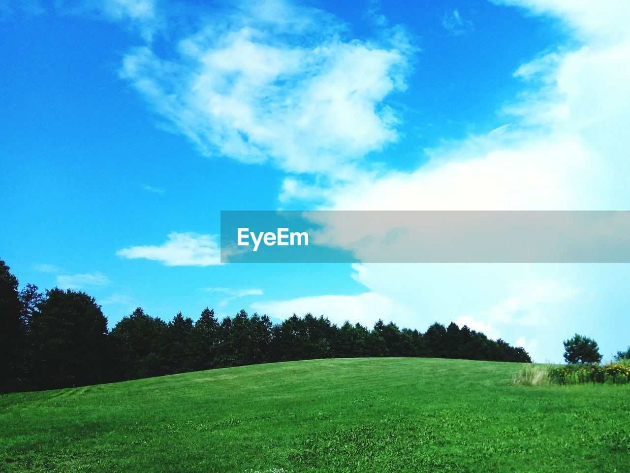 plant, sky, grass, cloud - sky, tree, tranquil scene, green color, landscape, beauty in nature, scenics - nature, environment, tranquility, land, field, nature, day, no people, non-urban scene, blue, growth, outdoors