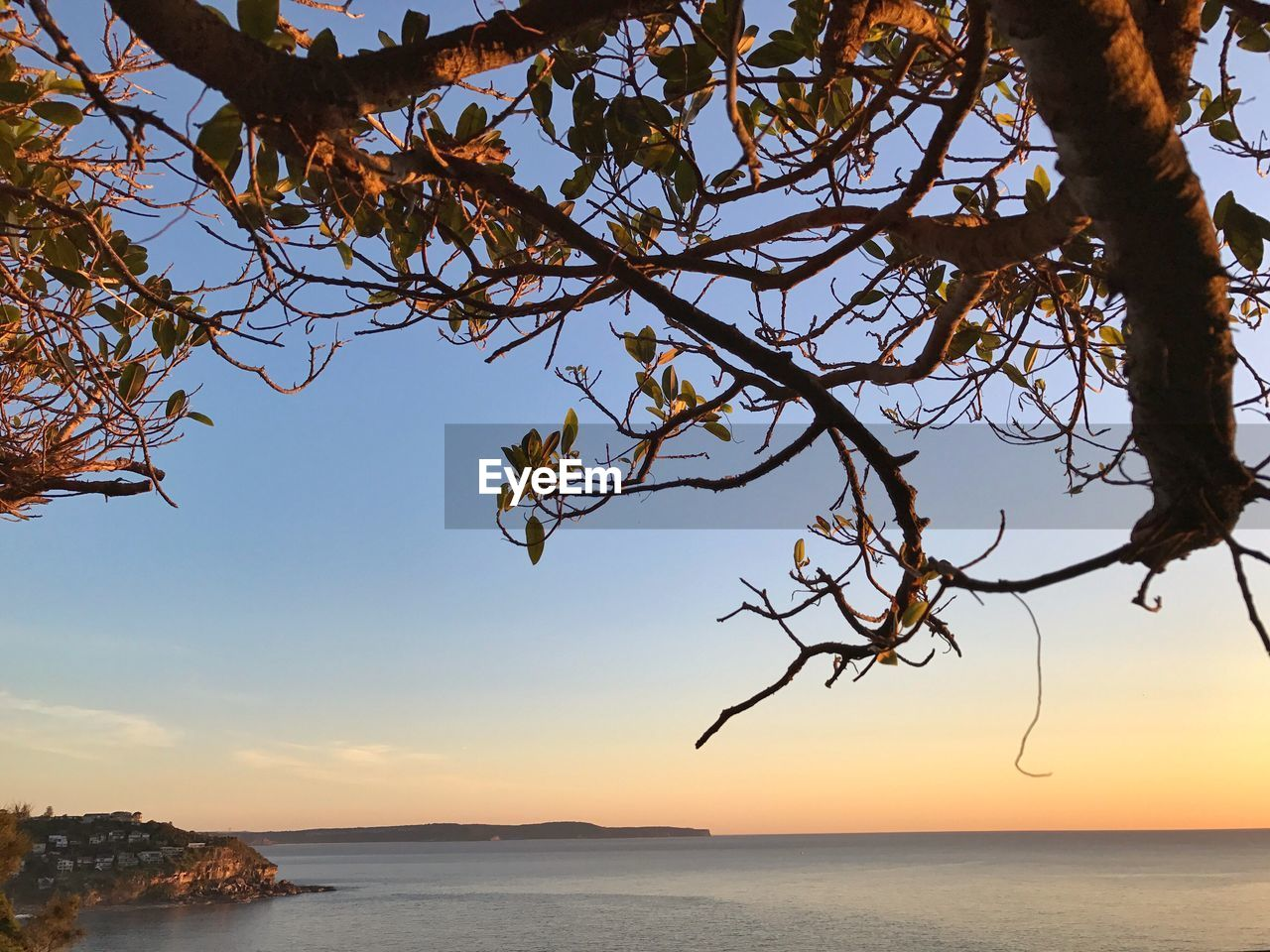 sea, nature, tree, beauty in nature, horizon over water, water, scenics, tranquility, sky, branch, tranquil scene, outdoors, no people, sunset, clear sky, day