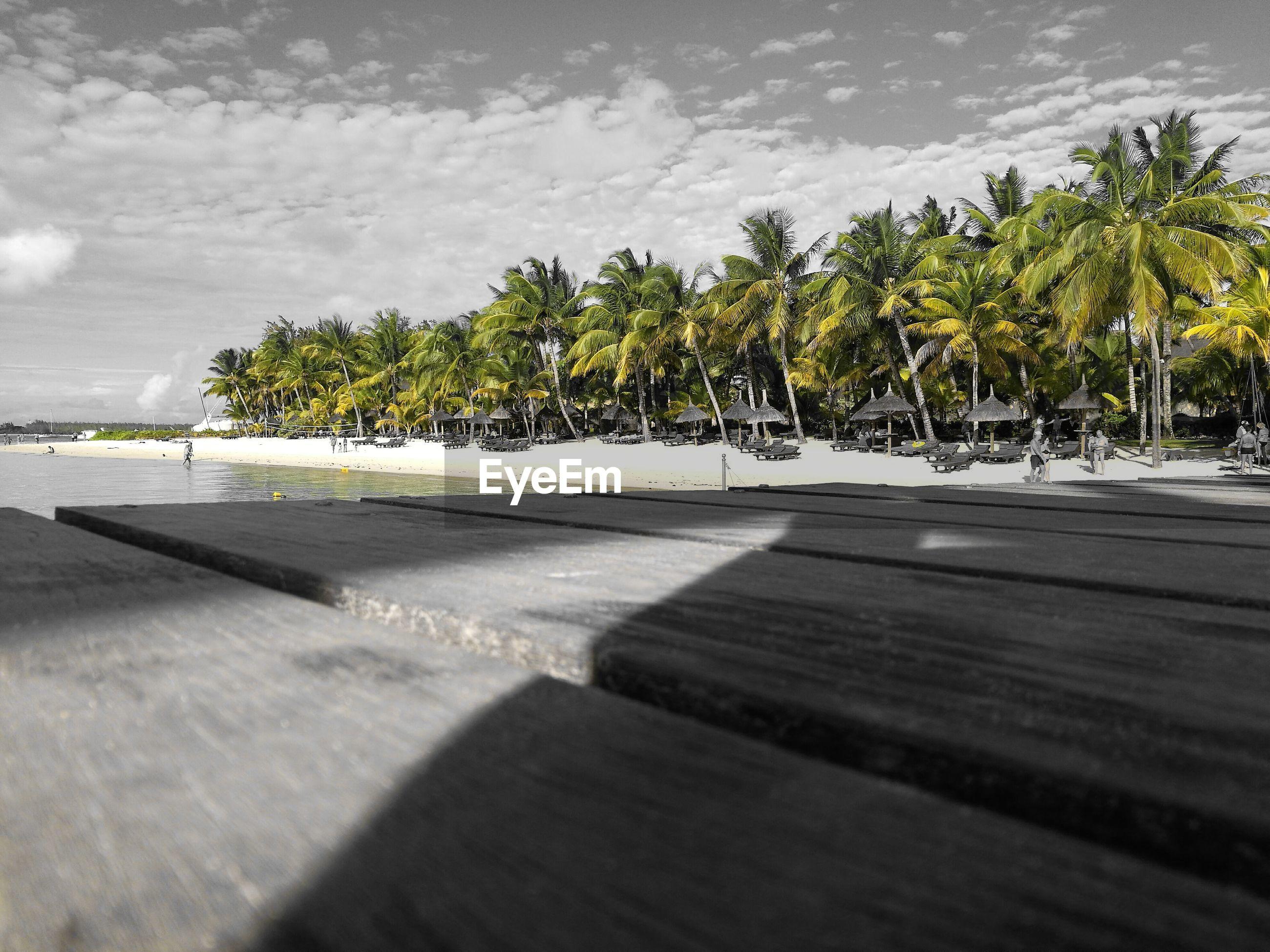 tree, cloud - sky, beach, sand, palm tree, outdoors, nature, sea, no people, sky, day, water