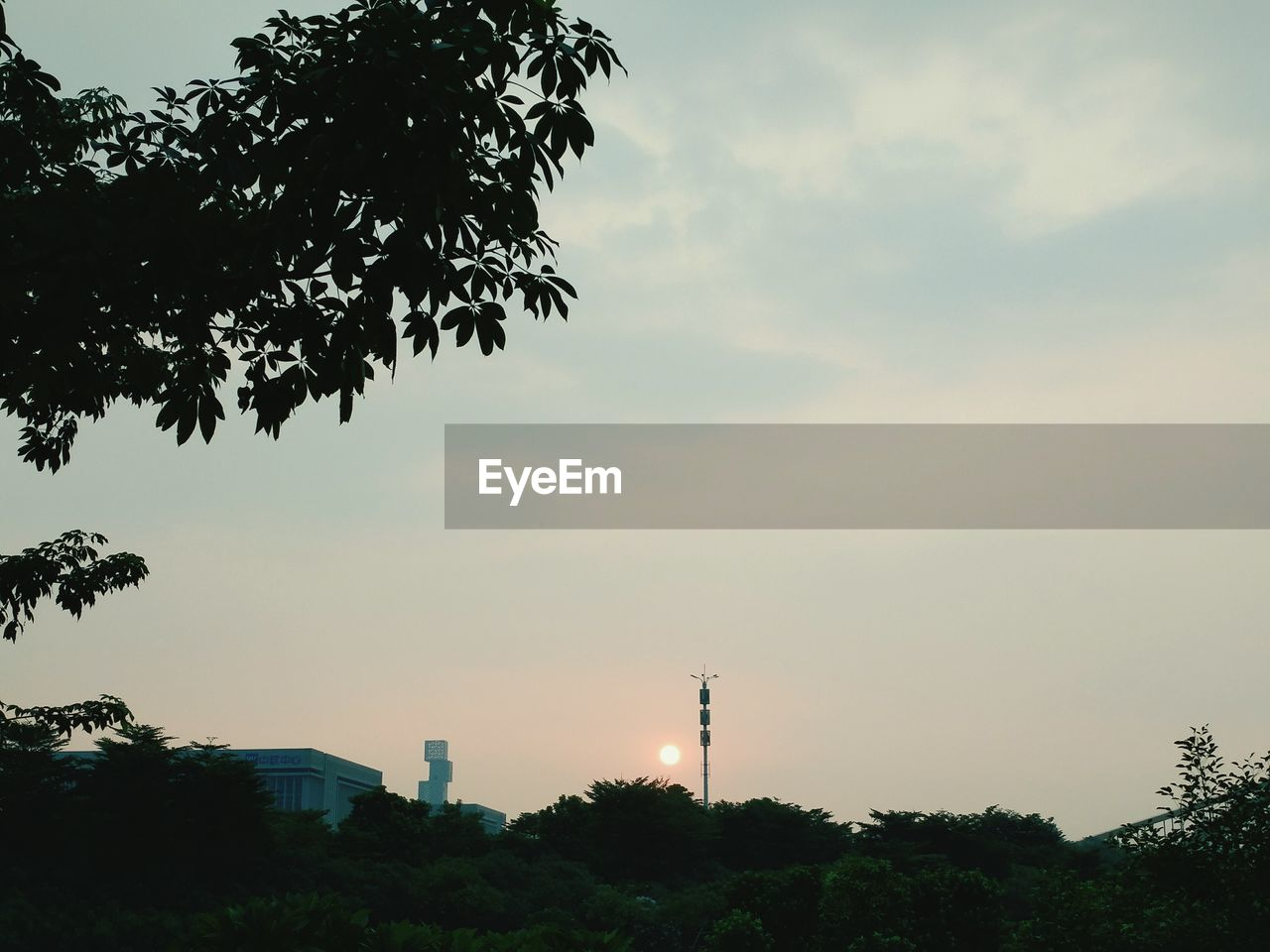 tree, built structure, architecture, sky, growth, no people, building exterior, low angle view, sunset, storage tank, outdoors, silhouette, nature, factory, day, beauty in nature, water tower - storage tank