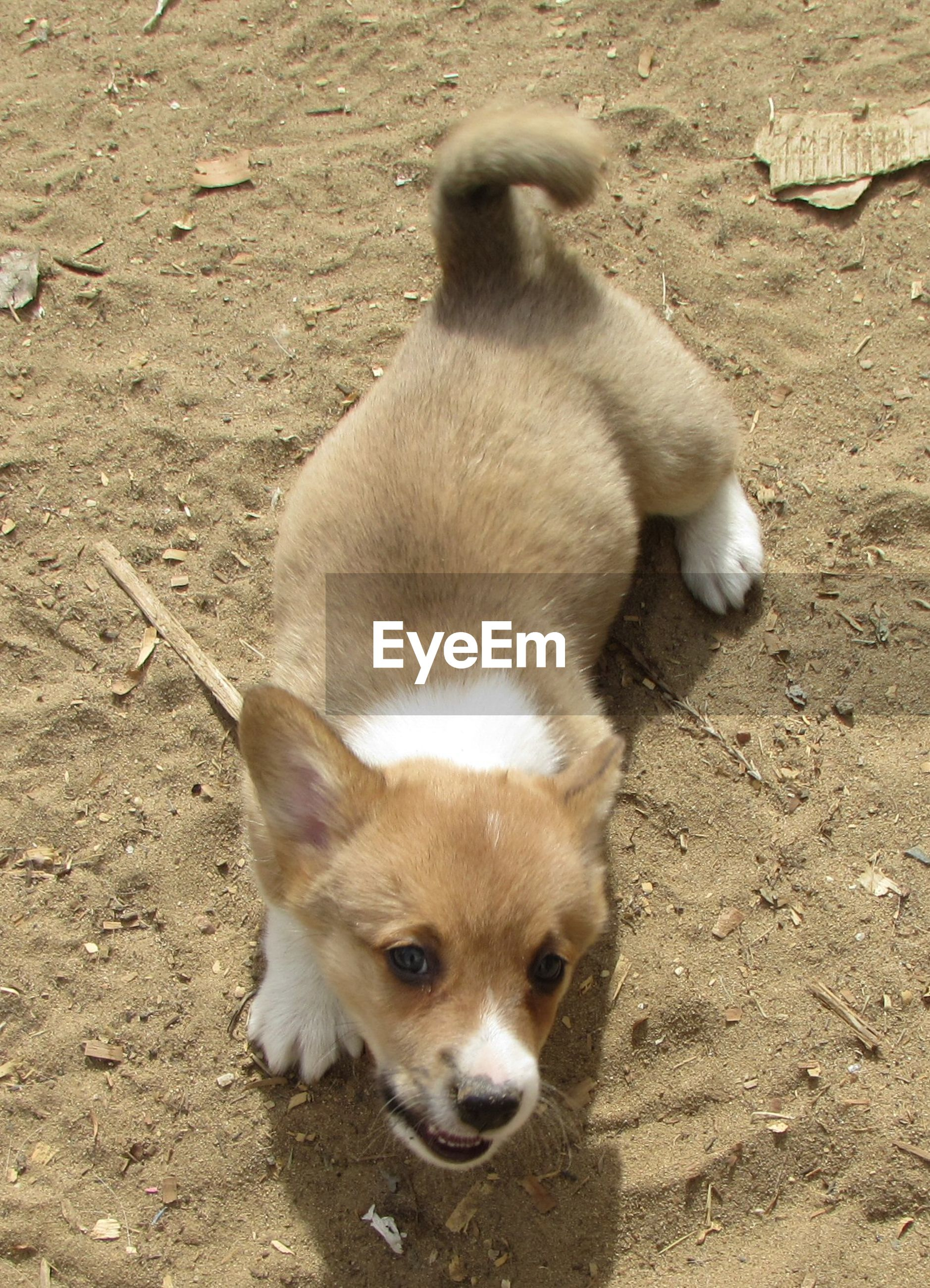 High angle view of puppy in field