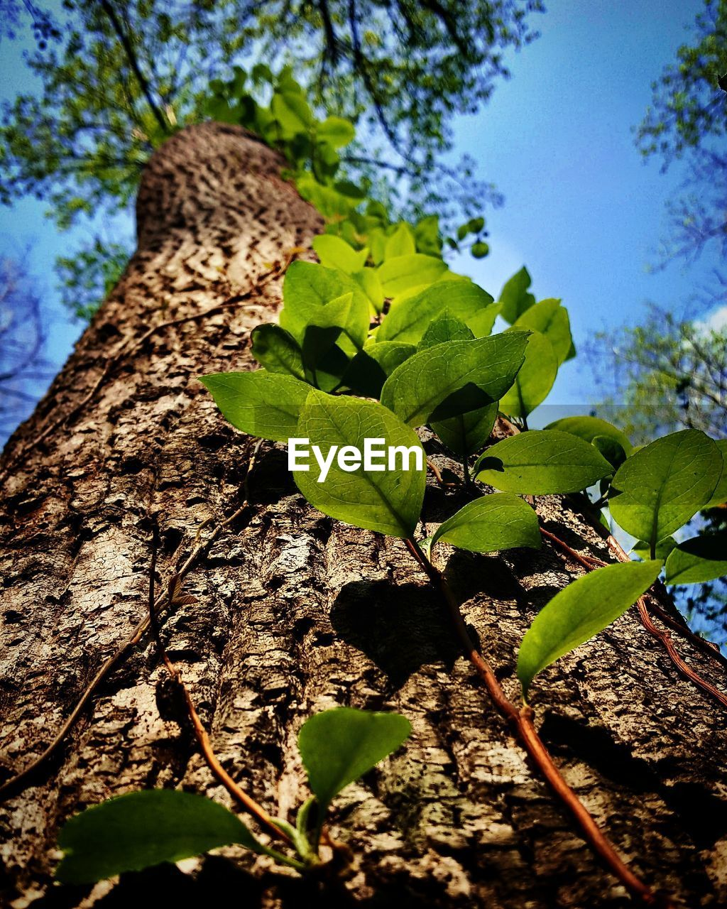 leaf, plant part, plant, tree, growth, nature, green color, day, beauty in nature, no people, tree trunk, close-up, trunk, sunlight, low angle view, outdoors, selective focus, branch, sky, focus on foreground, leaves