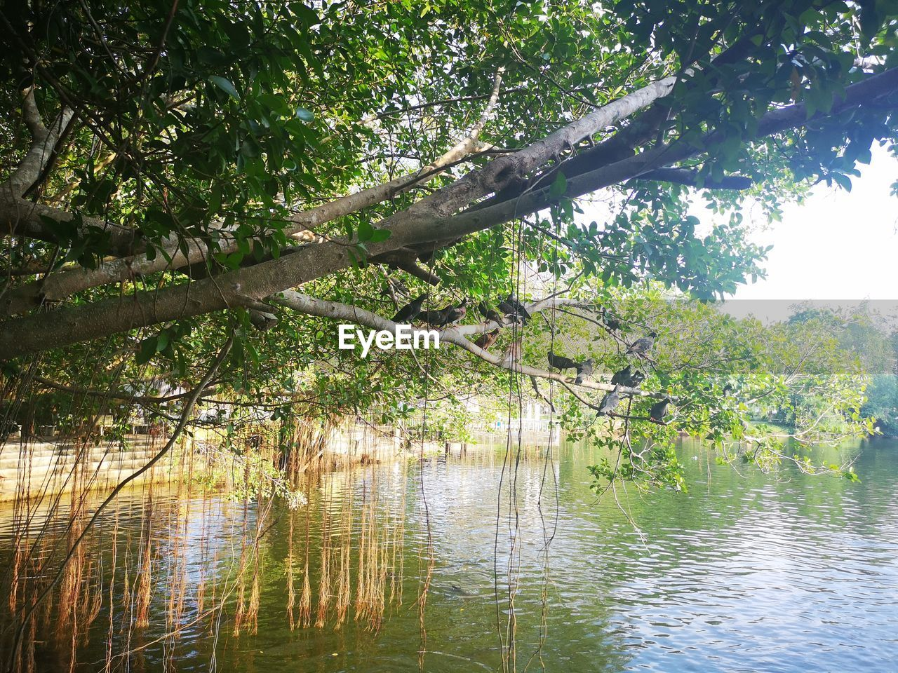 tree, plant, water, lake, tranquility, beauty in nature, nature, forest, growth, no people, day, tranquil scene, scenics - nature, green color, land, reflection, branch, outdoors, leaves