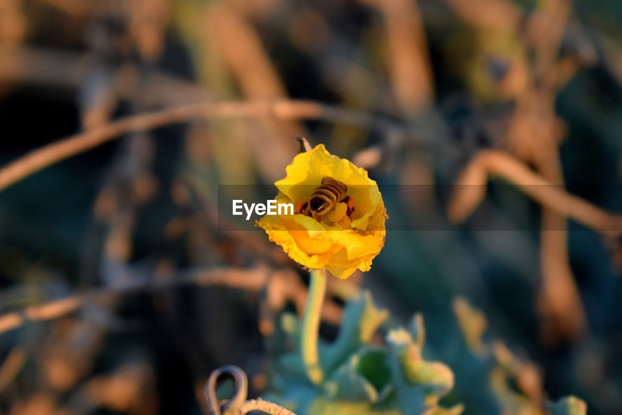 flower, yellow, fragility, nature, beauty in nature, growth, petal, flower head, freshness, plant, focus on foreground, botany, close-up, outdoors, blooming, day, no people