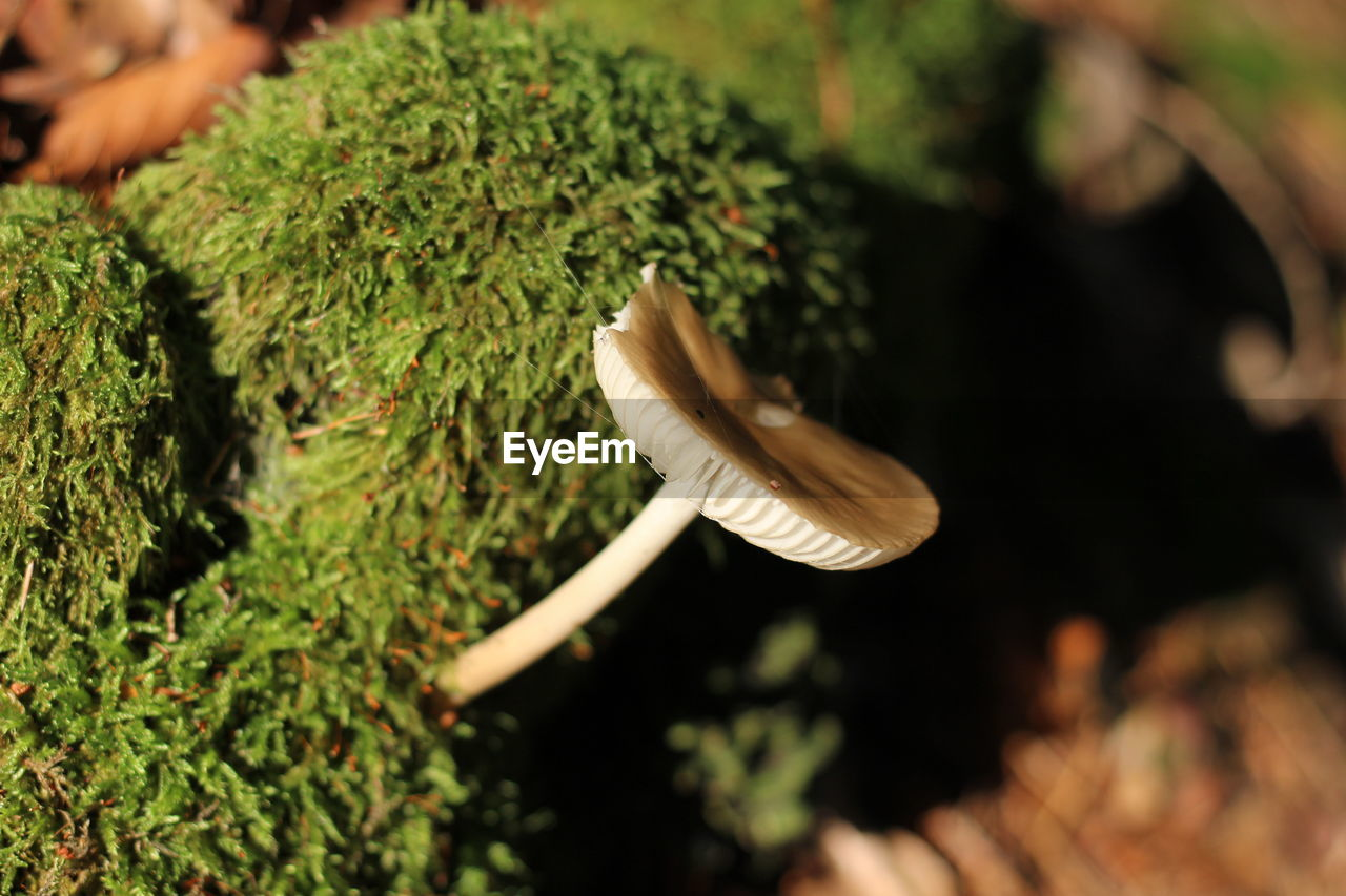 growth, selective focus, plant, close-up, no people, mushroom, nature, fungus, beauty in nature, day, food, green color, vegetable, leaf, high angle view, outdoors, food and drink, toadstool, vulnerability, freshness