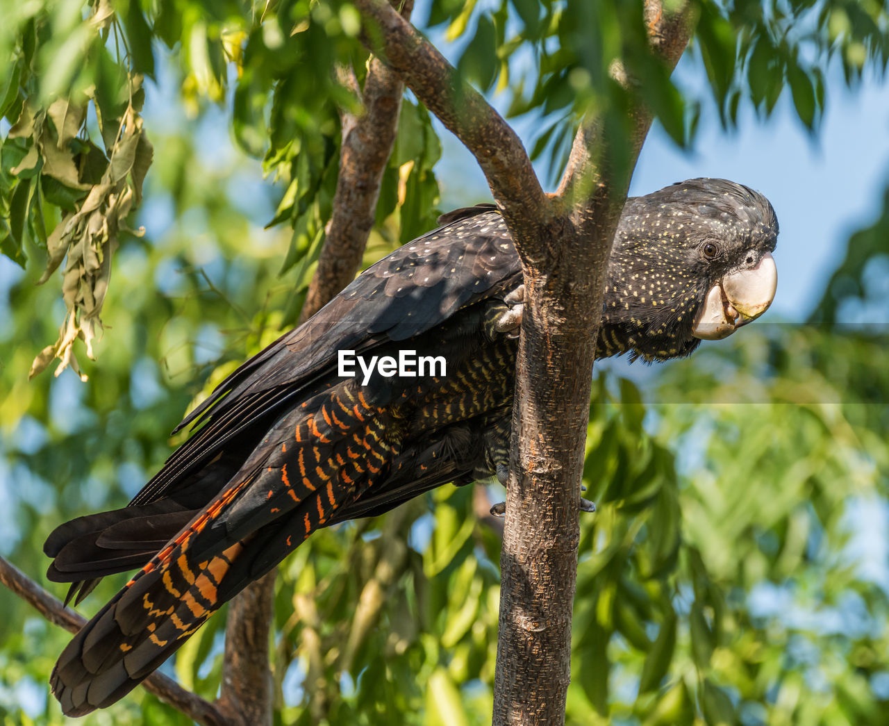 animals in the wild, animal wildlife, animal, animal themes, one animal, vertebrate, plant, focus on foreground, tree, no people, perching, nature, branch, bird, day, low angle view, close-up, sunlight, outdoors, woodpecker, animal wing, butterfly - insect