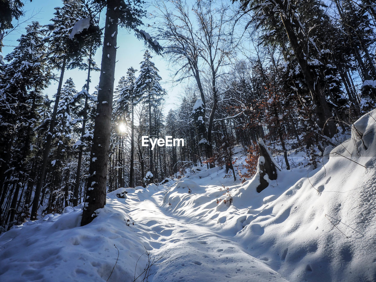 snow, winter, cold temperature, tree, plant, beauty in nature, covering, white color, land, nature, tranquility, sunlight, scenics - nature, field, day, no people, tranquil scene, non-urban scene, frozen, outdoors, snowcapped mountain, powder snow