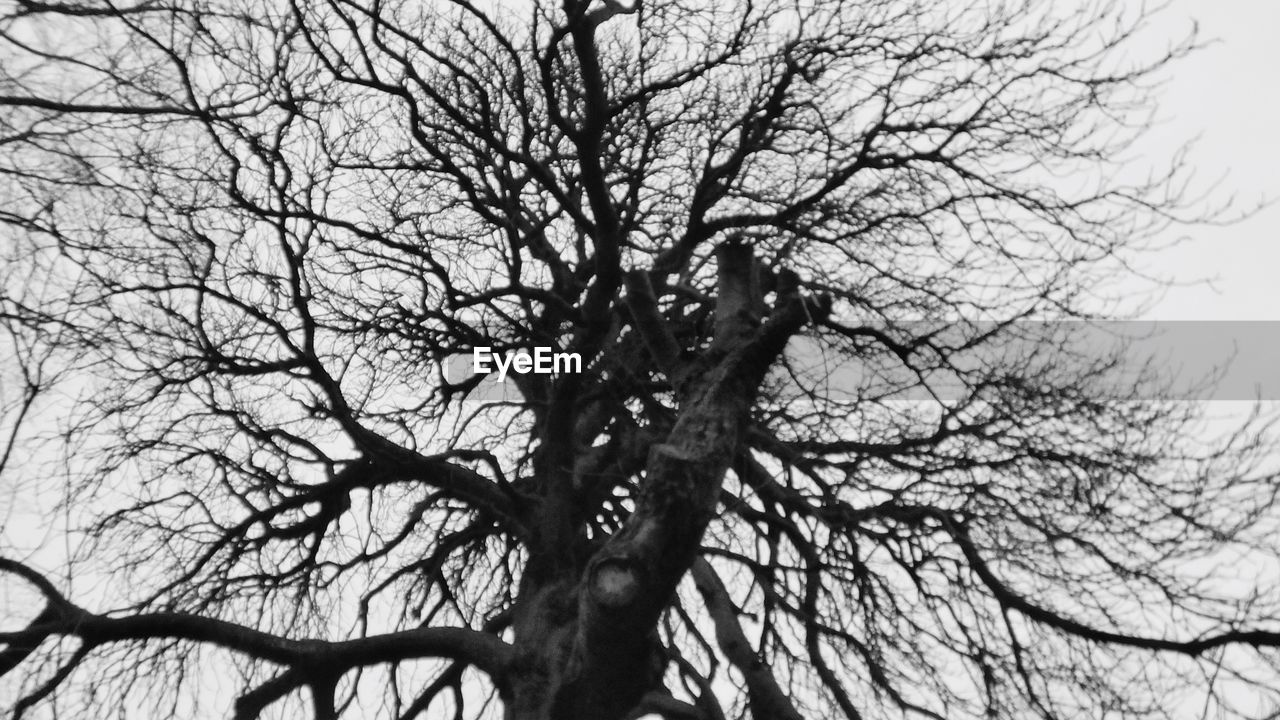 bare tree, branch, tree, low angle view, nature, tree trunk, outdoors, beauty in nature, no people, sky, day